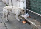 Самарская губдума попытается разрешить отлов бродячих животных задорого