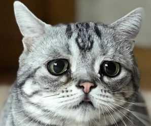 """Алексей Бузинный охарактеризовал экономическую ситуацию в Тольятти словами """"ничего хорошего"""""""