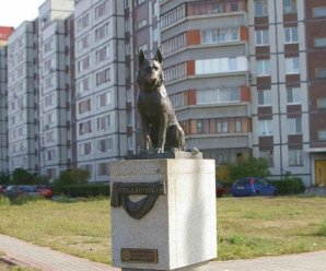 Псу Верному по прозвищу Константин приписали ульяновские корни