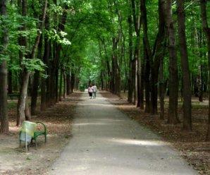 Юрий Целиков: лесу Тольятти нужны асфальт и лавочки