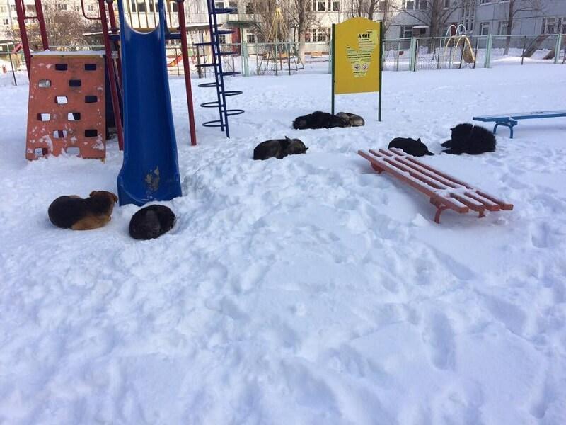 Шлюзовой: собаки вместо детей