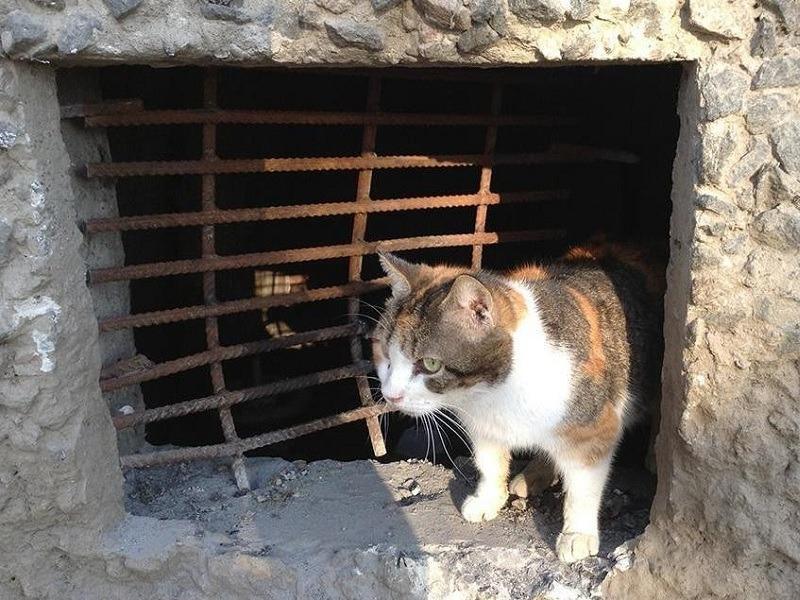 Минстрой РФ защитит права кошек из подвалов многоквартирных домов