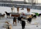 Правительство Самарской области проспонсирует удвоение числа бездомных животных в приютах