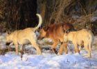 Бродячие собаки начали активно уничтожать дикую природу Самарской области