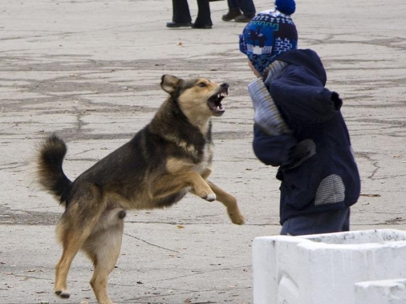 Депутат: невозможно избавиться от нападающей на детей бродячей собаки