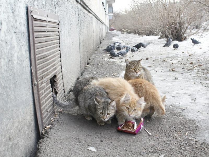 Подвалы многоквартирных домов обяжут снабдить кошачьими лазами