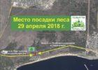 29 апреля: посадка леса на собранные горожанами деньги