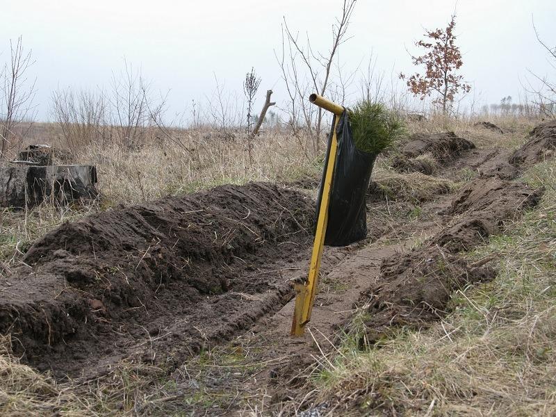В Тольятти провалена весенняя посадка леса за счет областного бюджета