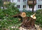 Администрация Тольятти отчиталась о потере 7209 деревьев за девять месяцев