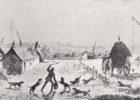 """Егерь: безответственная """"зоошиза"""" Самарской области ставит бродячую собаку выше человеческого здоровья и жизни"""