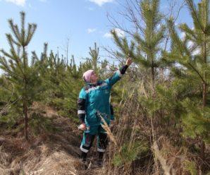 В Тольятти сгорел высаженный добровольцами молодой лес?