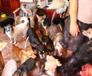 В Госдуме РФ призвали отменить тольяттинский лимит на кошек и собак