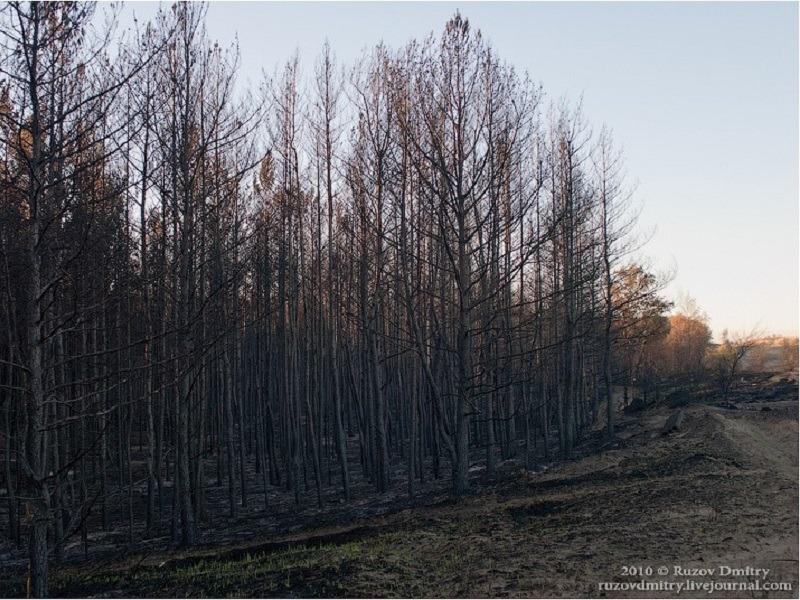Сергея Анташева возмутили идущие в лес шашлычники