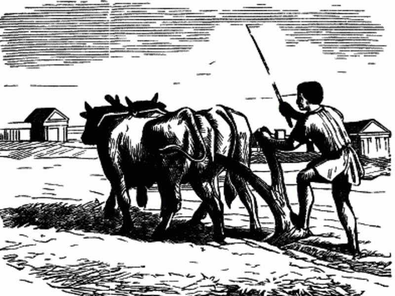 Дмитрий Азаров пообещал относиться к плохо работающим в соцсетях чиновникам как к нерадивым быкам
