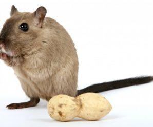 """На торгующей орехами уличной точке у """"Новинки"""" обнаружили мышей"""