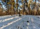 Анонс: лесные страдания