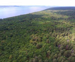 Жителей Самарской области призвали присоединиться к обращению о спасении Ягодинского леса