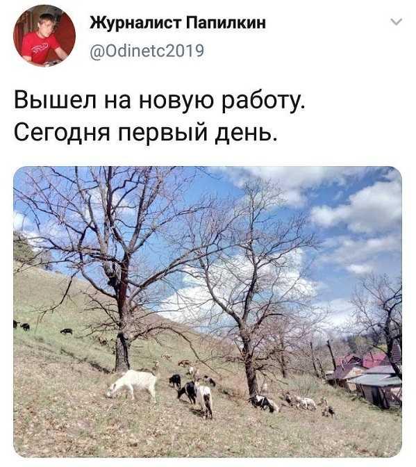 Скандально известный в Самарской области журналист переквалифицировался в козопасы на фоне коронавируса