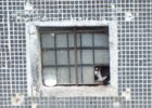 Жительницу дома № 74 по 70 лет Октября возмутили пускающие кошек в подвал добряки