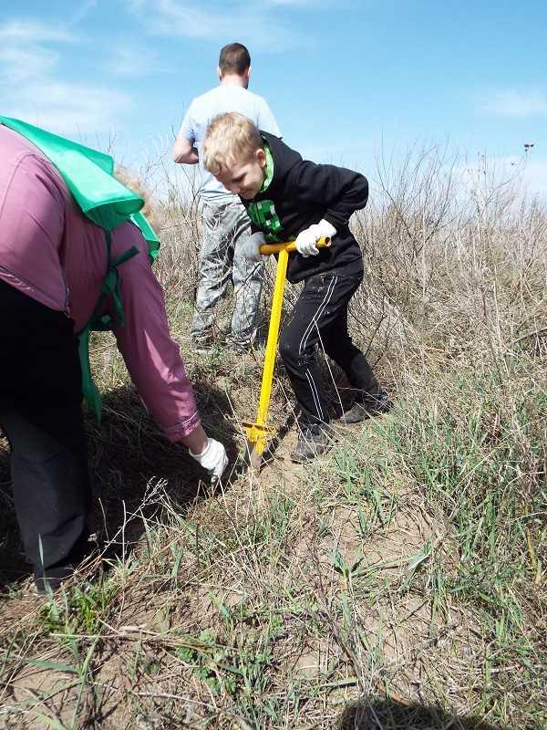 Восстановление леса Тольятти: где не проедут трактора