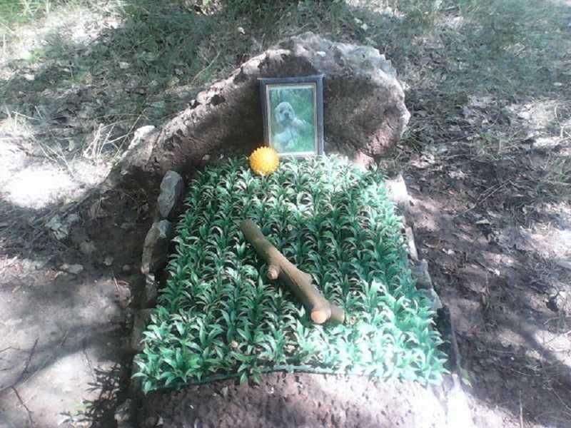 Горадминистрация продолжает борьбу за ликвидацию тольяттинских кладбищ домашних животных