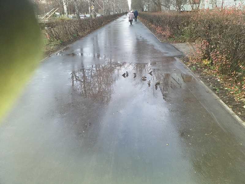 Свежеотремонтированные тротуары Тольятти превратились в купальни для птиц